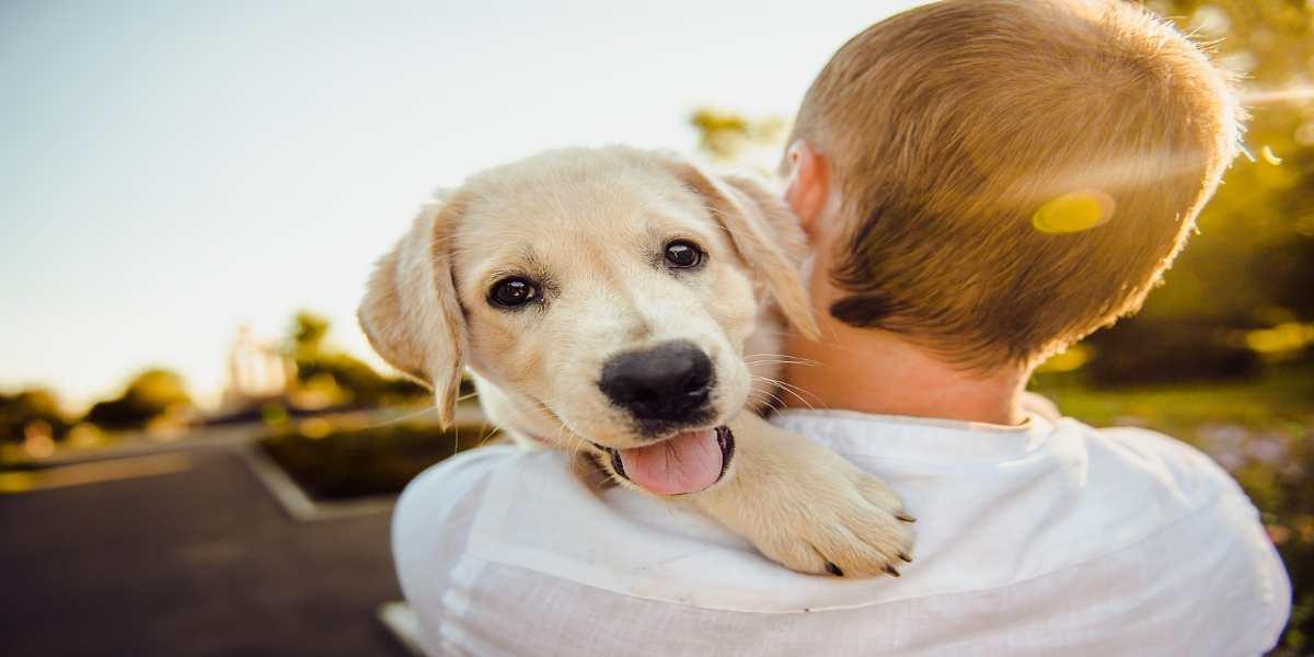 il comportamento del cane con il padrone
