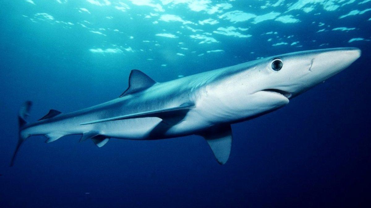 pescatore attaccato squalo fiumicino