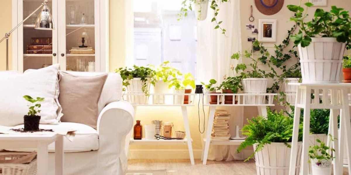piante da appartamento in estaate ecco come curarle