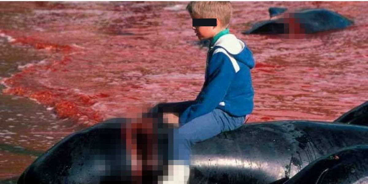 Grindadráp: la crudele caccia ai delfini
