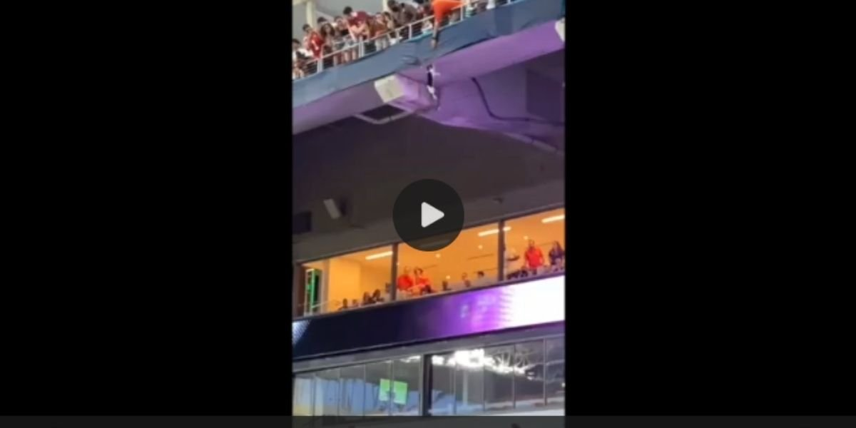 Video gatto salvato allo stadio di Miami